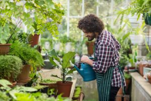 Guy watering the plants