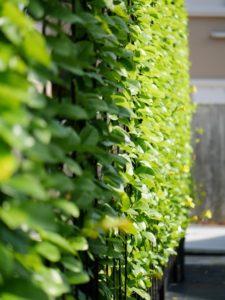 plants adorning a wall