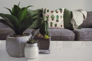 succulents on a coffee table