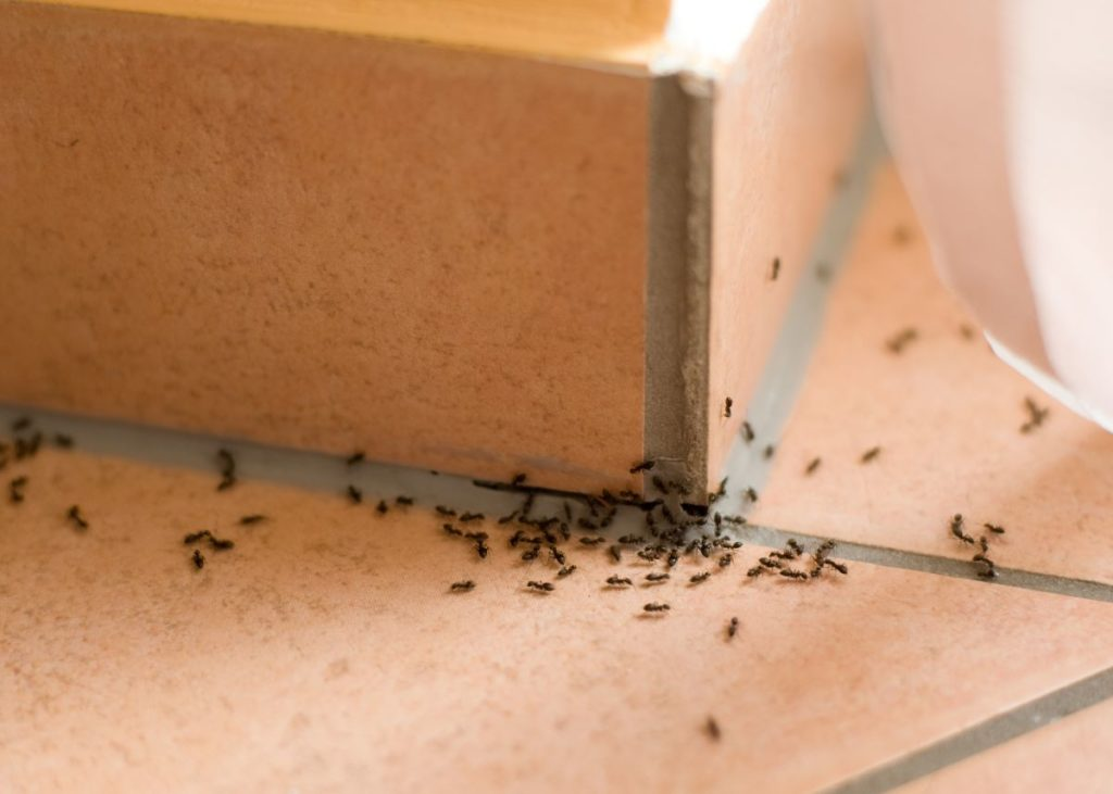ants inside house