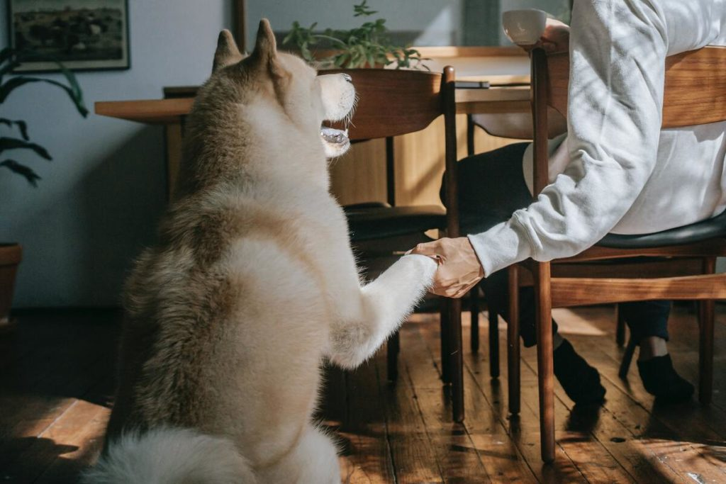 owner holding the paw of their dog